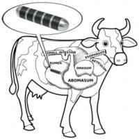 Rumax Cow Magnet